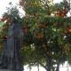 Carmen circondata di aranci